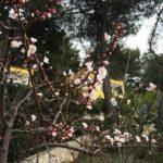 Vacanze puglia Villaggio Elisena