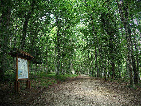 parco nazionale del gargano villaggio vacanze elisena
